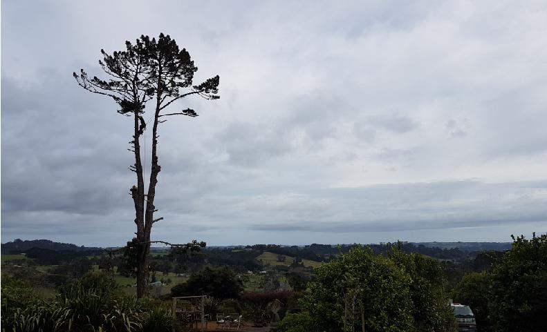 TREE MAINTENANCE HARDFELL